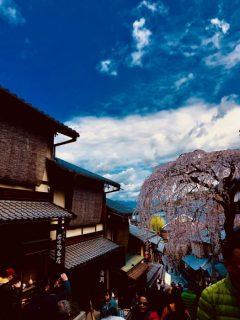【豊橋店】ぶらり日帰り京都の旅